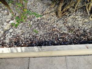 Dry hedge dirt