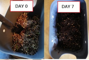 Week of Composting